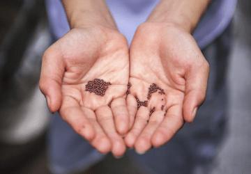 Trust-Seeds in Hands